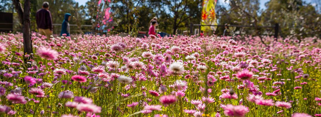 Kings Park Festival