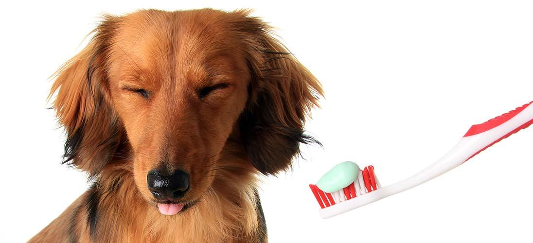 Doggy Dental - Blog