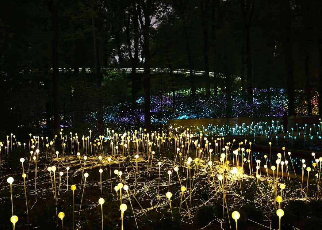 Field of Light: Avenue of Honour